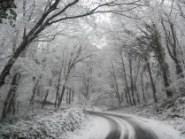 Belgrade Forest under snow, January 2012