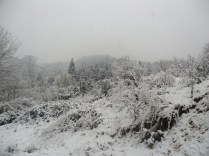Belgrade Forest (Istanbul) under snow, January 2012 (photo 84 of 95)