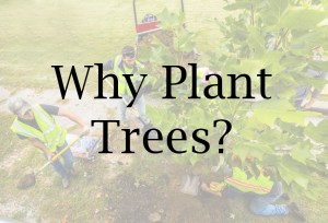 Why Plant Trees