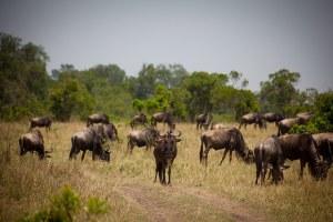 Kenyan wildlife - image via Flickr by Jonathan Spence