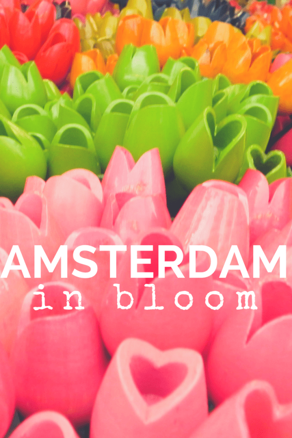 Amsterdam in Bloom