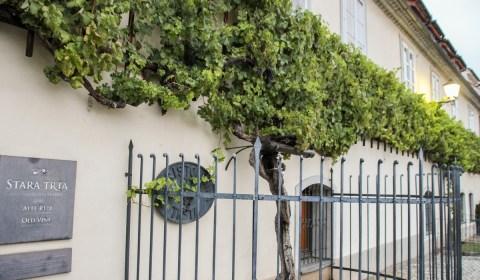 Old Vine   Sightseeing in Maribor