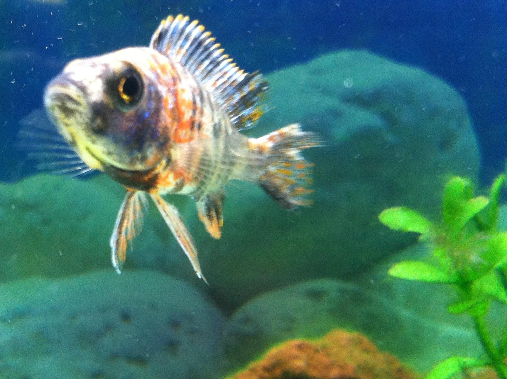 Freshwater fish kansas city - Freshwater Fish Kansas City