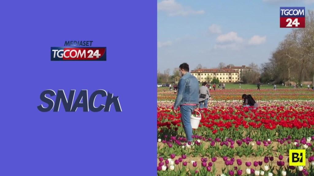 in-italia-come-in-olanda:-riaprono-i-campi-di-tulipani