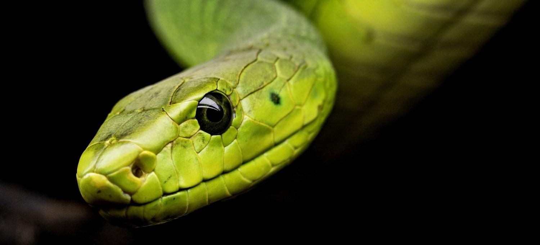 da-dove-arriva-la-paura-dei-serpenti?