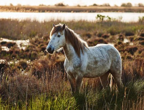 steppa-bianca-–-memorie-di-albino-cavallo-da-guerra