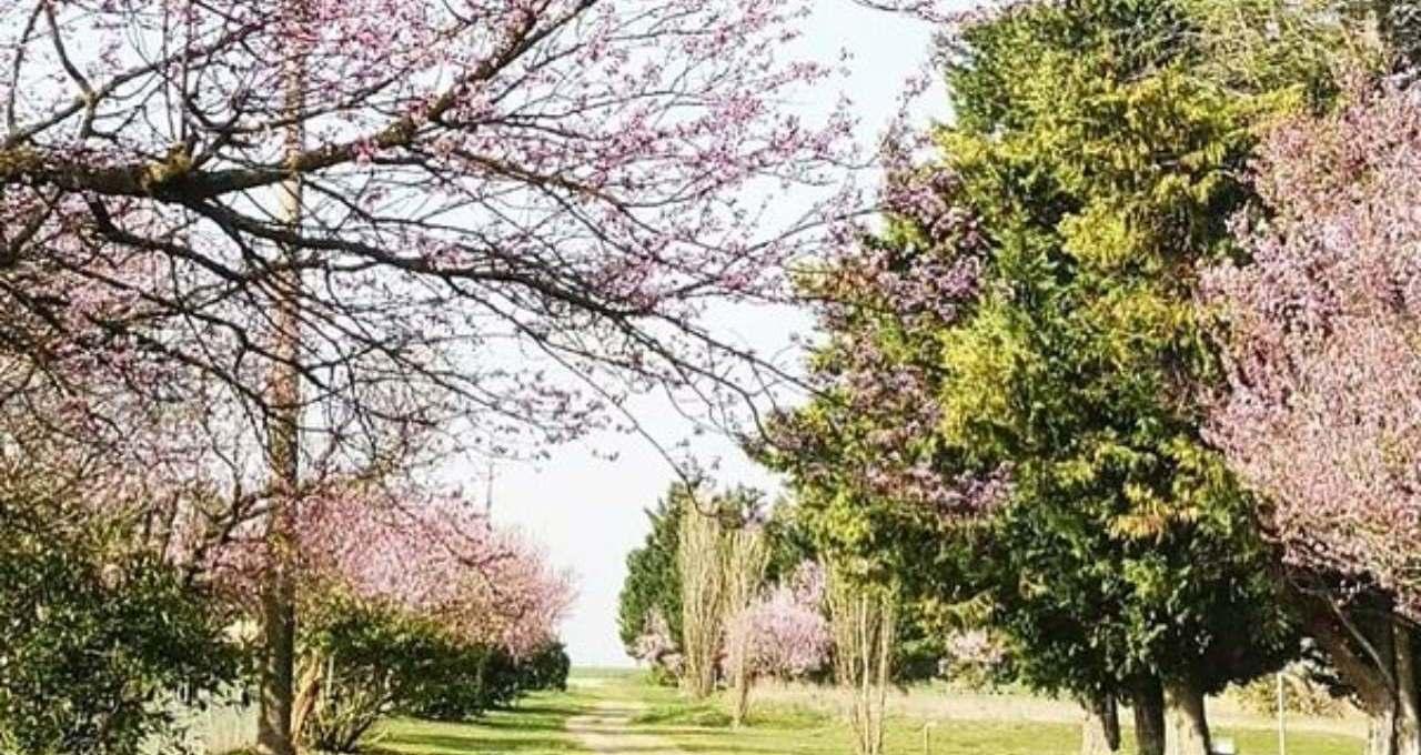 avete-mai-visto-la-tenuta-lamborghini?-un-posto-'incantato'-immerso-nel-verde,-tutte-le-immagini
