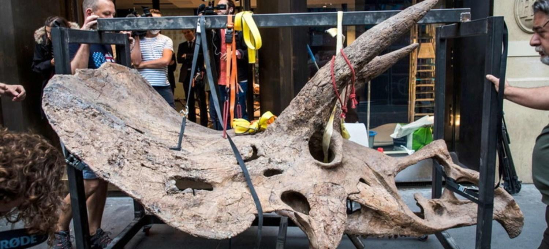 lo-scheletro-del-triceratopo-big-john-all'asta-a-parigi:-vale-un-milione-e-mezzo-di-euro