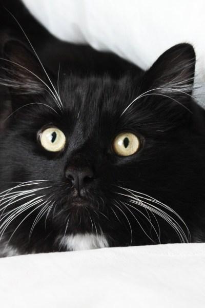 Top 10 gadgets your cat needs