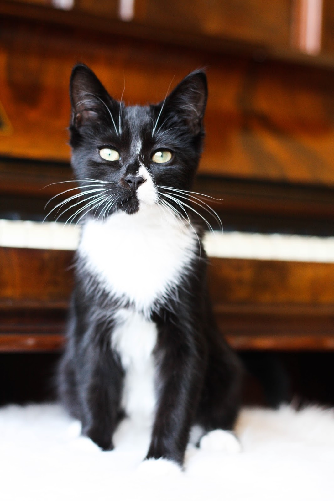 5 things you MUST do when you get a new kitten