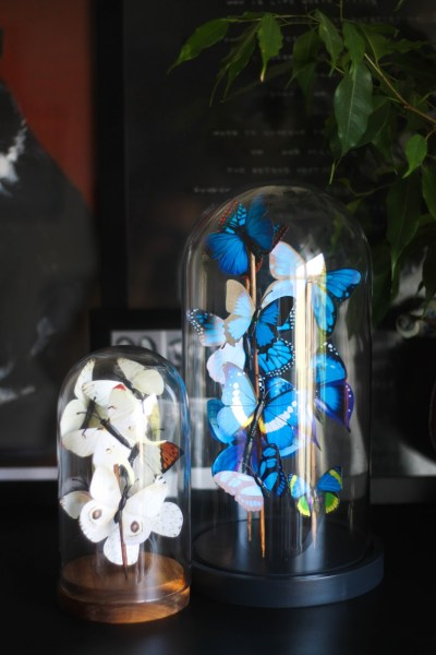DIY butterfly curio domes