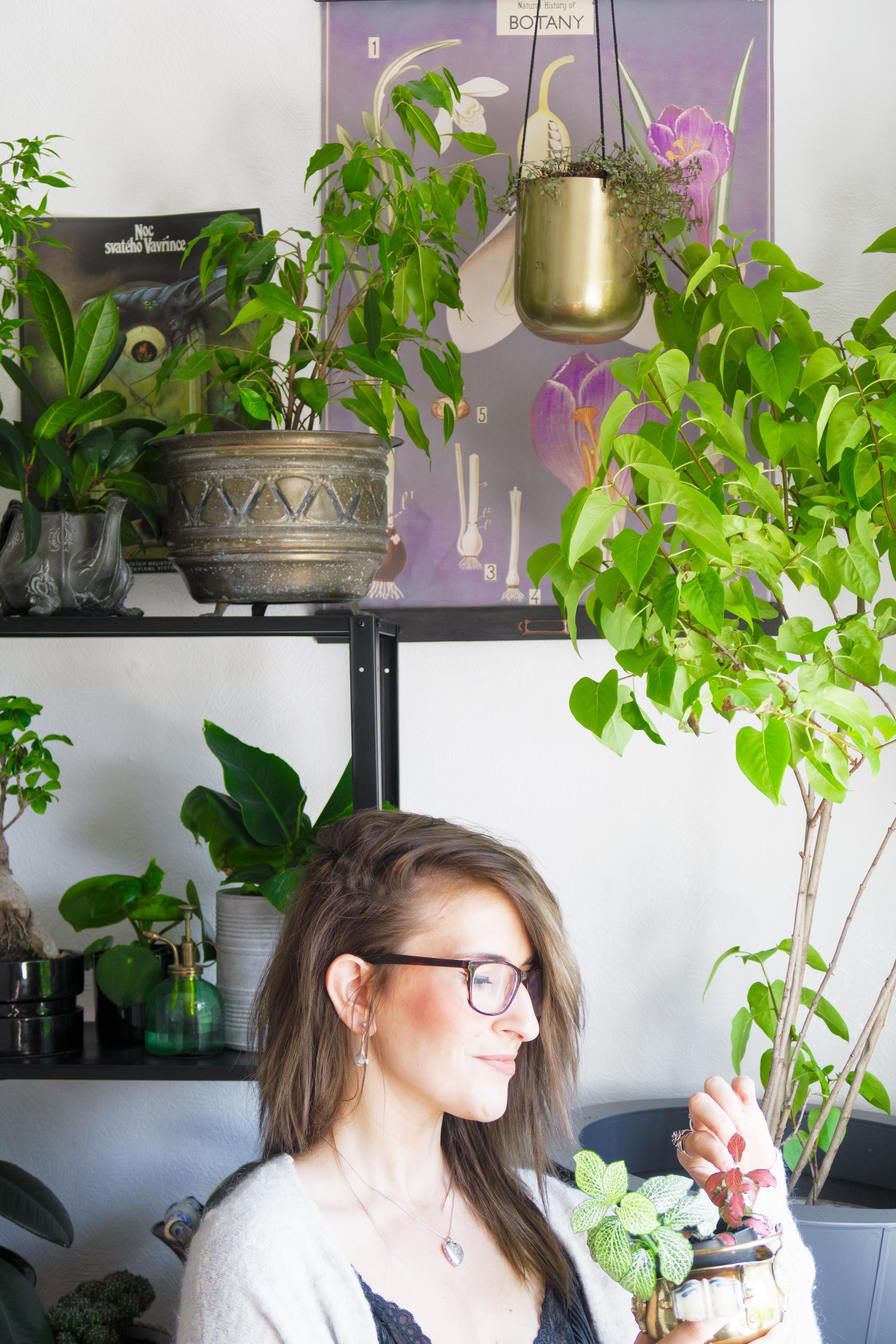 how to create an indoor garden interior indoor jungle