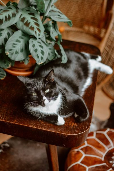 Feline Foodology: BARF raw food diet