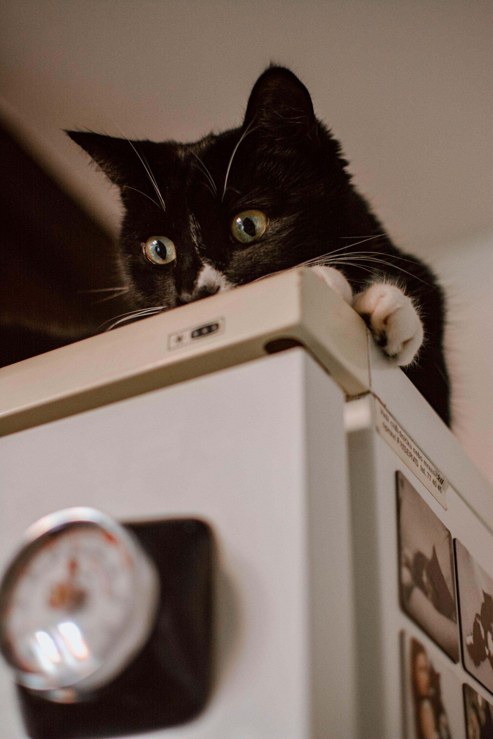 Feline Foodology: Dental Nutri Pockets by GimCat