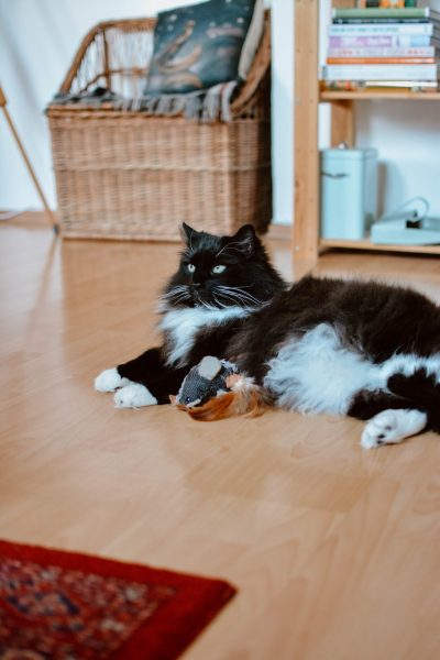 Feline Foodology: Urinary treats by Canvit