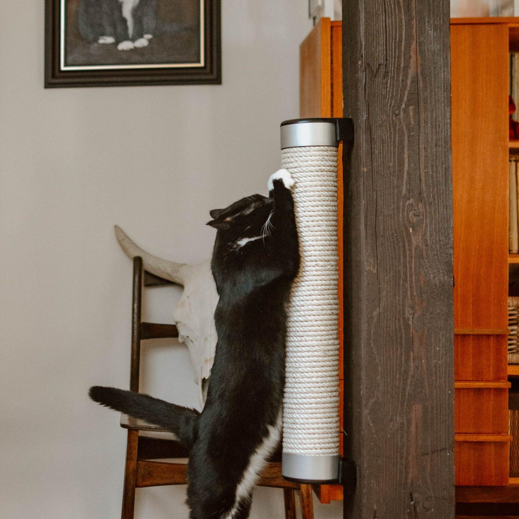 Catipilla cat scratcher review