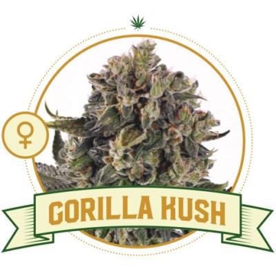 Gorilla Kush