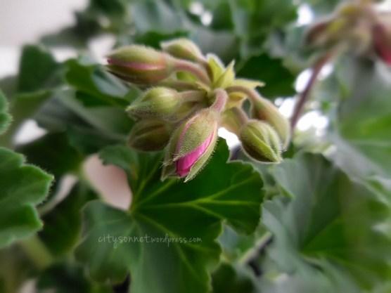 flowerbud14
