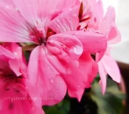 raindrops2