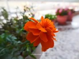 orangemarigold