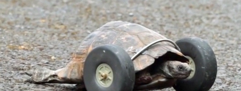 ctb podcast 146 turbo turtle the city that breeds