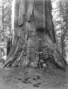 1871_Eadweard_Muybridge_california