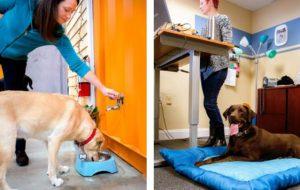 oficina pet friendly