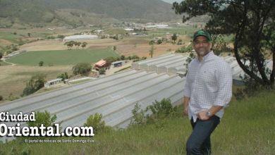 Photo of Otra faceta de Luis Alberto Tejeda: exitoso sembrador de ajíes, papas, tomates y pepinos, entre otros rubros + Fotos