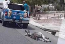 Photo of Alcalde Manuel Jiménez propone ordenanza para proteger animales de malos tratos
