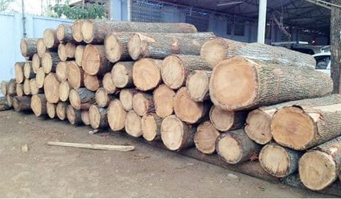 Types of Wood used in House Construction