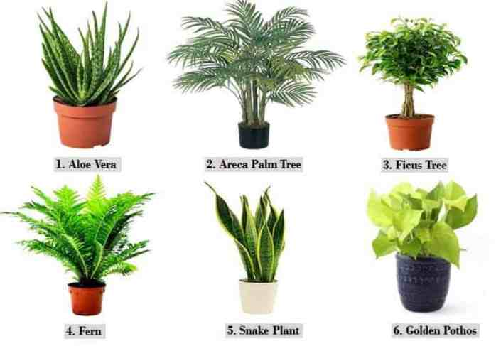 6 Plants for How to Keep House Cool in Summer Naturally