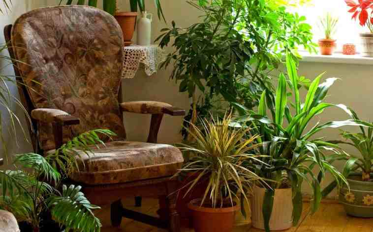 Planation in Room to Improve Indoor Air Quality