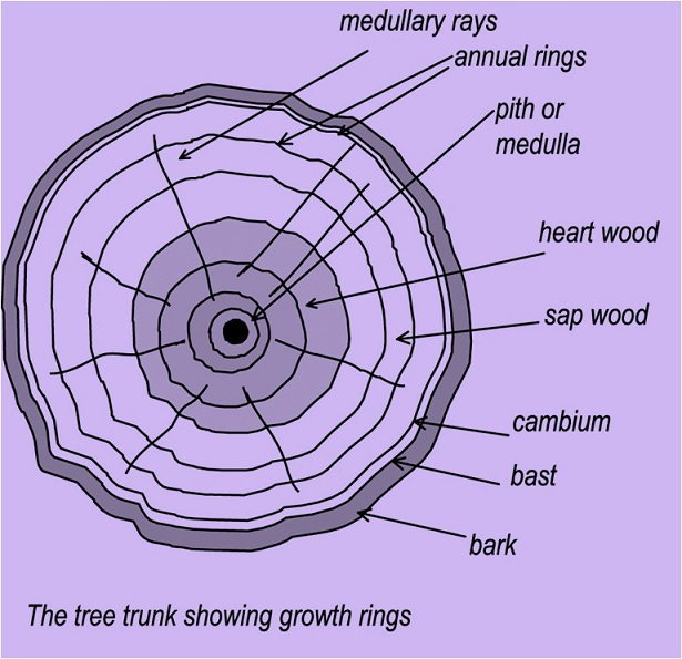 structure of a timber