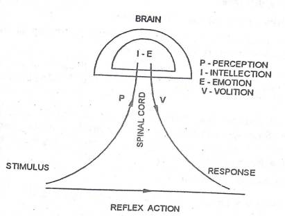 Reaction time and PIEV process