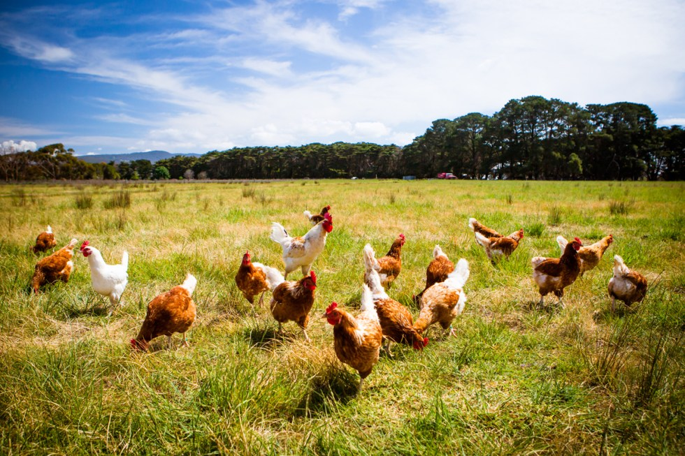 Years in the Making, Organic Animal Welfare Rules Killed by ...