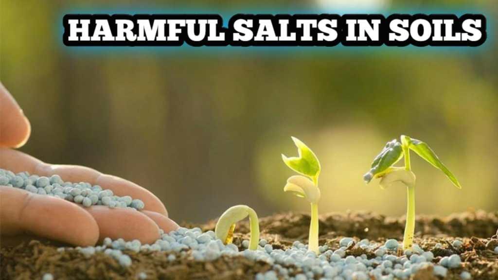 Harmful Salts In Soils
