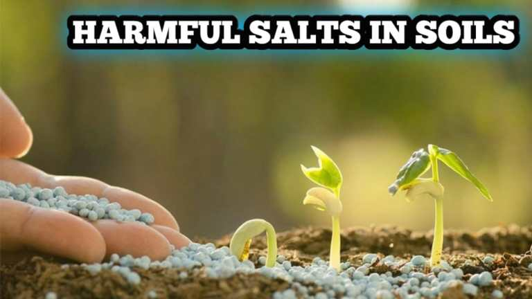 Read more about the article Harmful salts in soils