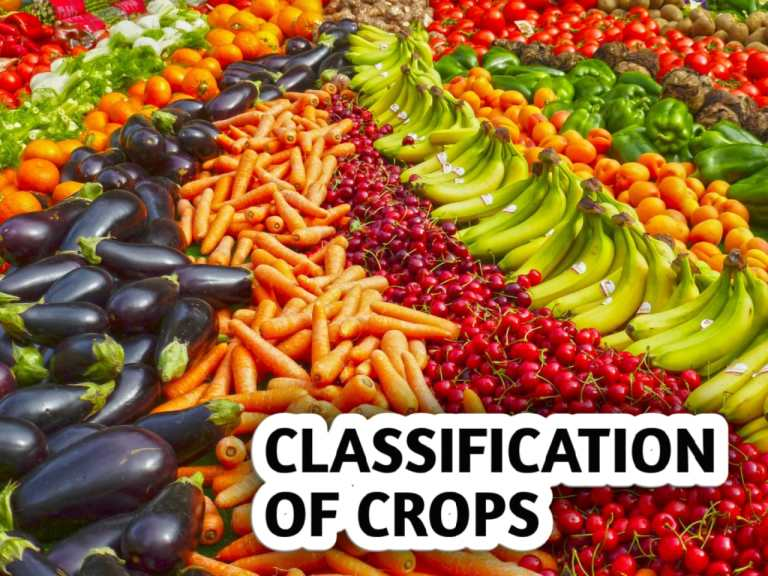 Read more about the article CLASSIFICATION OF CROPS