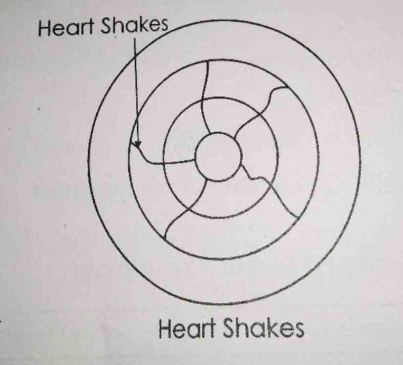 heart shakes timber defect