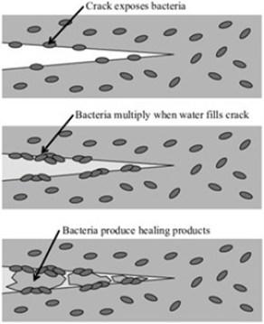 mechanism of self healing of concrete