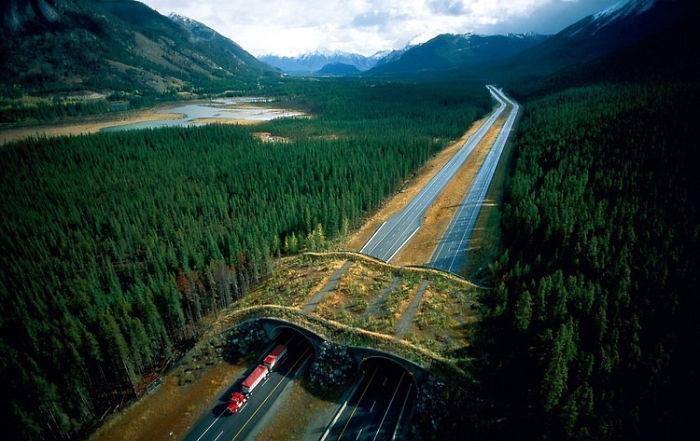 Resultado de imagen para Ecoducto en el parque nacional Banff en Canadá