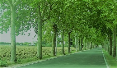 Objects of Road Side Development and Arboriculture