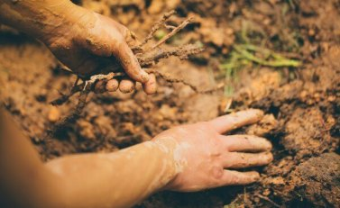 5 Way To Improve Soil Fertility -Mixed Cropping, Crop Rotation, Deep Taproot Plants, Land Fallow