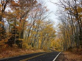 Rules for Roadside Tree planting - Spacing, arrangement & Location