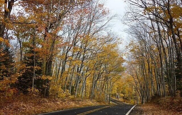 Rules for Roadside Tree planting – Spacing, arrangement & Location