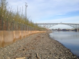 Restored low water habitat at Portland's South Waterfront