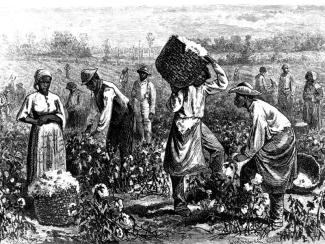 cotton_picking