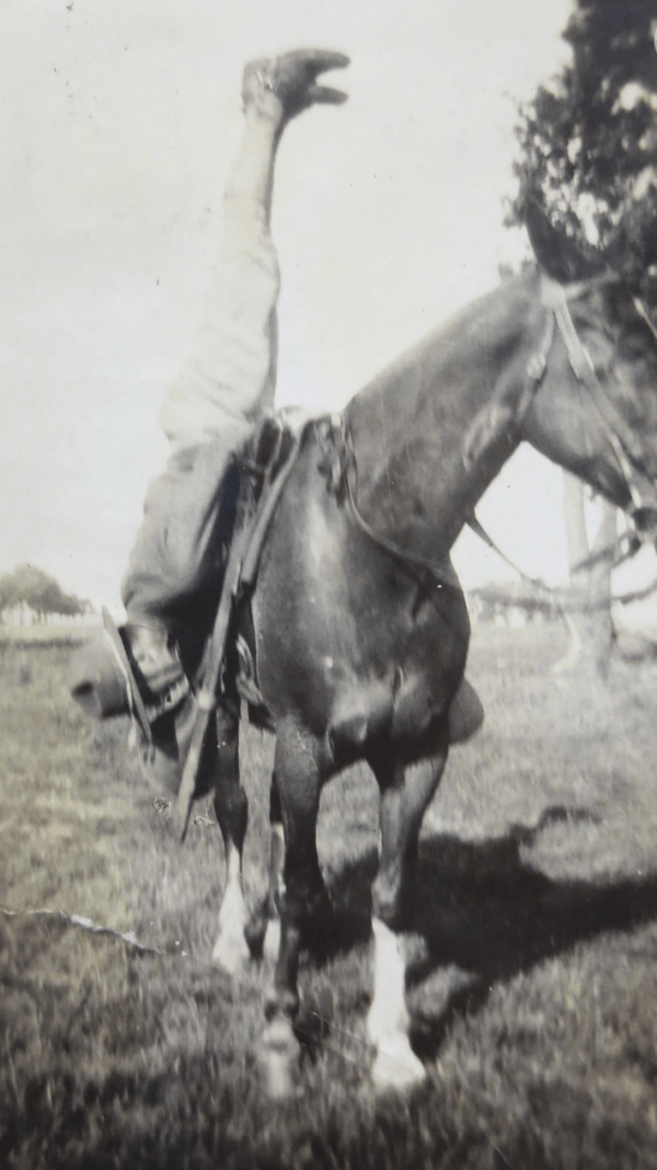 Old photo of a horse