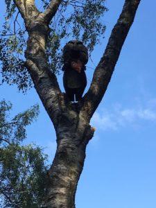 Ein Waldgeist an der Sechsseenplatte