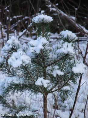 Snowflakes flowers